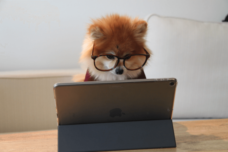 Pomeranian looking at an article on a laptop.
