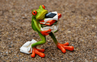 Frog carrying papers and a calculator
