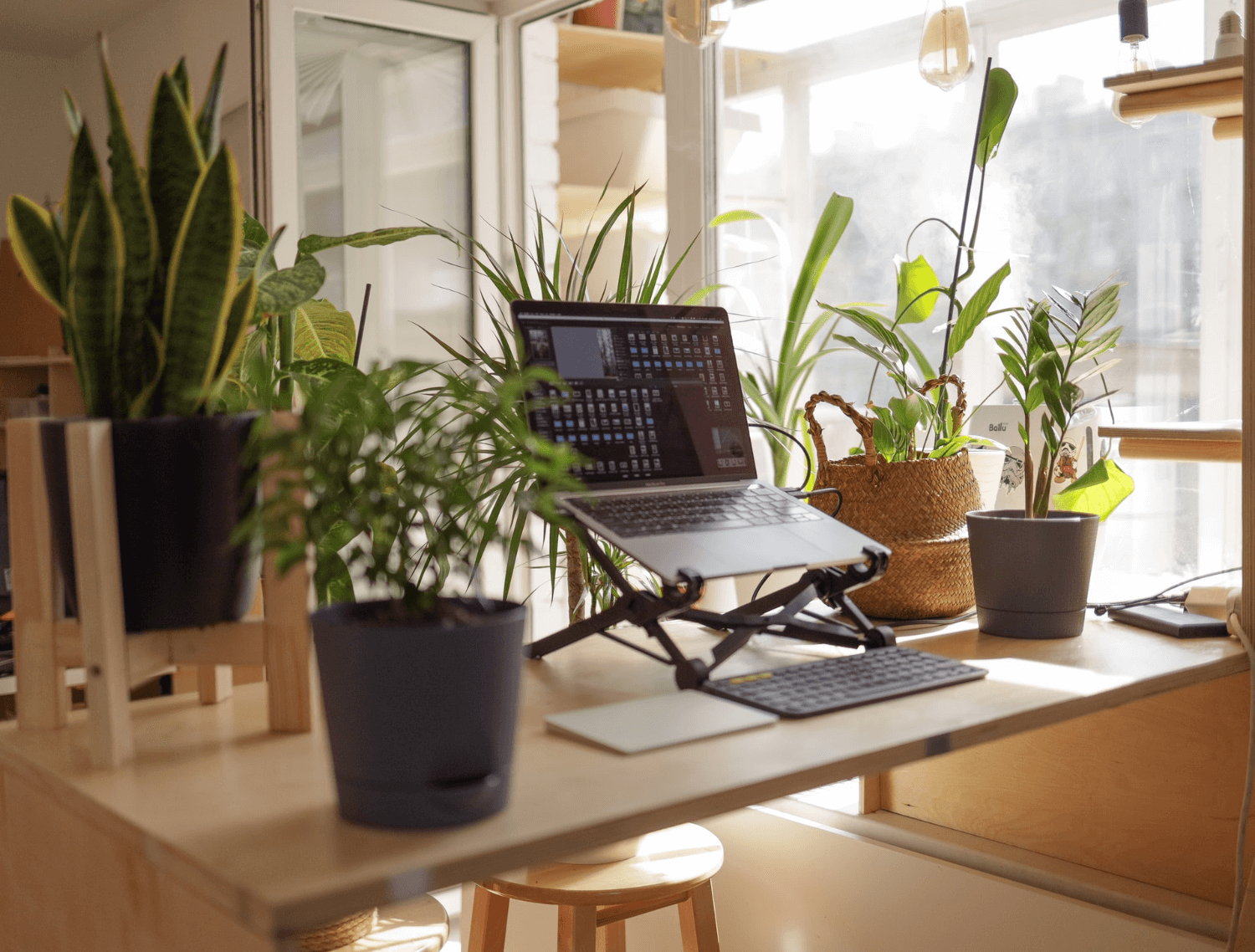 Freelancing allows you to work from home - home office with plants