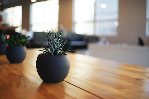 Small pot plants on a table