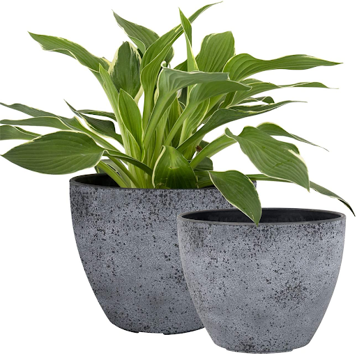 Classic planters for home office